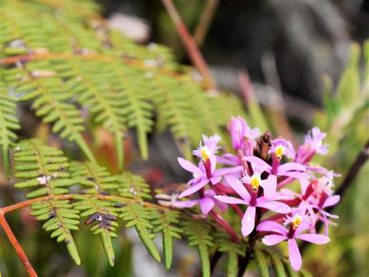 Während einer Wanderung lässt sich die üppige Flora und Fauna des Areals erkunden... Bei Gachantivá. Kolumbien (Foto Jörg Schwarz)