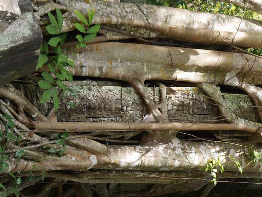 Hohe Stufen und ein tiefer Abgang... Ta Keo, Kambodscha (Foto Jörg Schwarz)