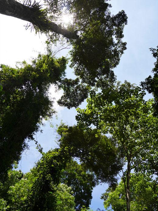 Beim Blick nach oben erfreut sich das Herz... Langkawi, Malaysia (Foto Jörg Schwarz)