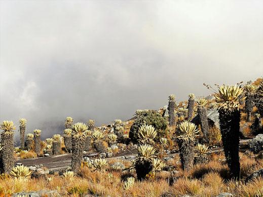 Je höher wir steigen, desto mehr Wolken umhüllen und und die Natur, Parque Nacional del Cocuy, Kolumbien (Foto Jörg Schwarz)