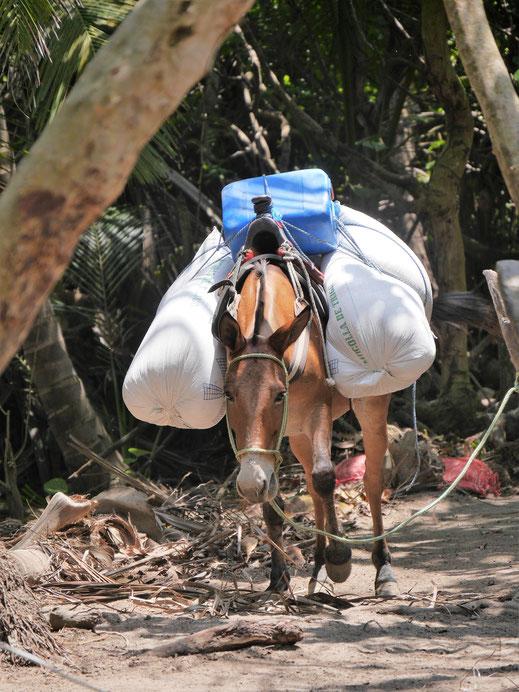 Hätte man gern und kann man auch nutzen... Tayrona Park, Kolumbien (Foto Jörg Schwarz)