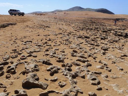 In der braunen Wüstenlandschaft hilft nur ein Geländefahrzeug... Guajira-Wüste, Kolumbien(Foto Jörg Schwarz)