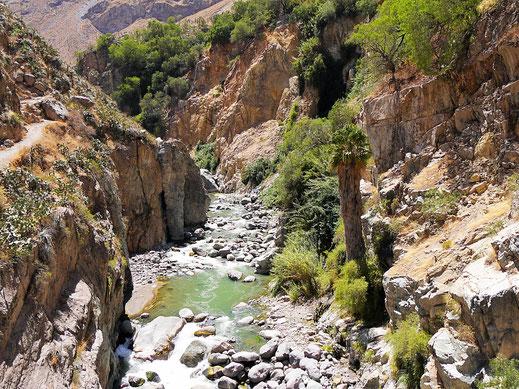 Der Río Colca, der den Canon hier geschaffen hat... Sangalle, Peru (Foto Jörg Schwarz)