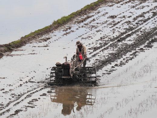 Andere Länder, andere Traktoren... Chau Doc, Vietnam (Foto Jörg Schwarz)