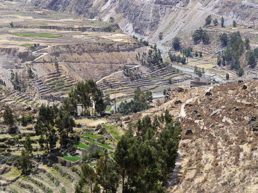 Eine der terrassenreichsten Regionen der Welt: Der Colcacanon bei Coporaque, Peru (Foto Jörg Schwarz)