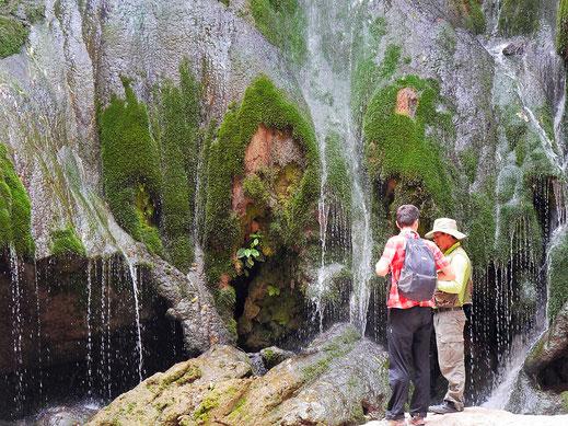 Ein Wasserfall speist Moose und andere Pflanzen in der Trockenzeit, Toro Toro, Bolivien (Foto Jörg Schwarz)