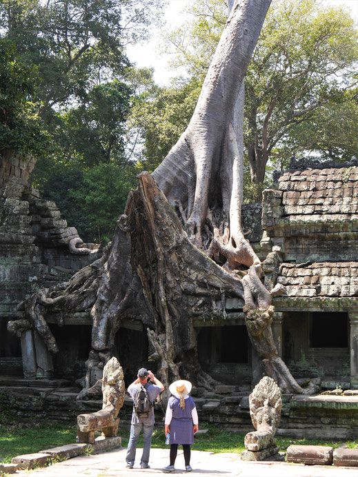 Bäume haben sich hier auf alles gesetzt... Preah Khan, Kambodscha (Foto Jörg Schwarz)