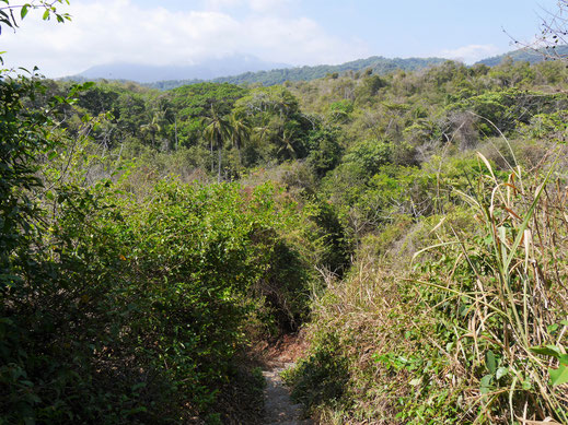 Tropischer Küstenbewuchs zeichnet das Areal aus, Tayrona, Kolumbien (Foto Jörg Schwarz)