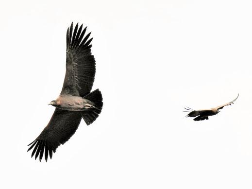 Zwei auf einen Streich, Cruz del Condor, Peru (Foto Jörg Schwarz)