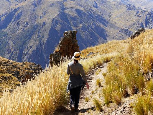 Wie sehr wir das Pampasgras lieben...! Huancavelica, Peru (Foto Jörg Schwarz)