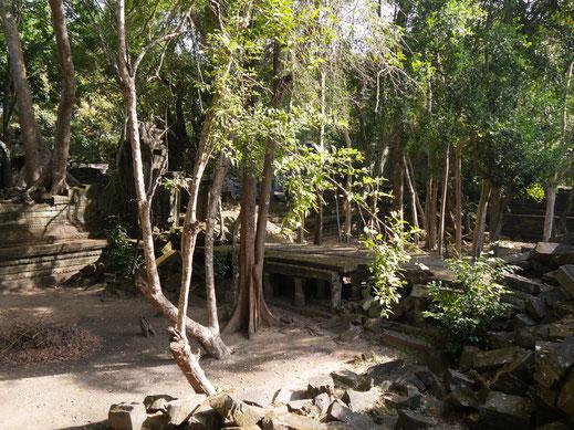 Die Fahrräder können nicht groß genug, die Kleinen nicht klein genug sein... Ta Keo, Kambodscha (Foto Jörg Schwarz)