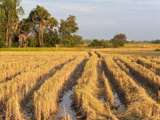 In unmittelbarer Nähe von Meas Homestay, bei Takeo, Kambodscha (Foto Jörg Schwarz)