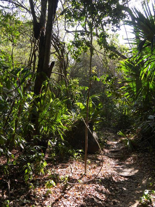 Es geht durch üppigen Urwald, Tayronapark, Kolumbien (Foto Jörg Schwarz)