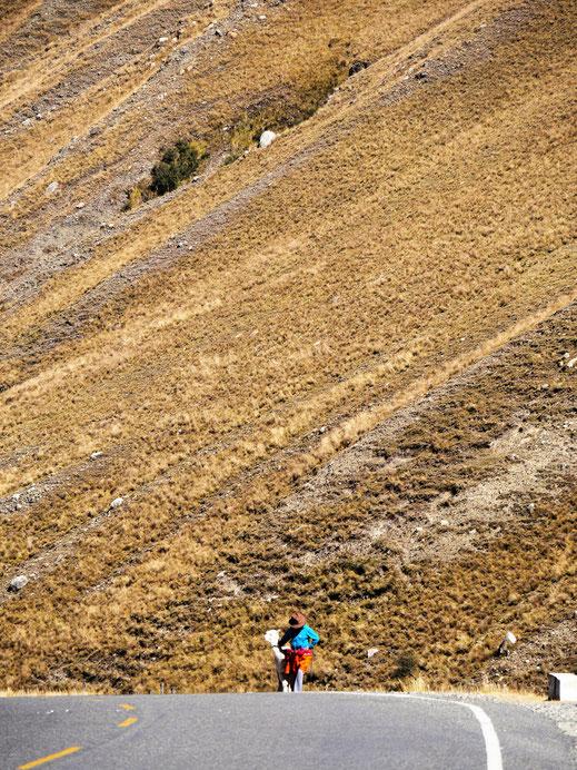 Wenn das Lama nicht so will, wie sein Besitzer... Cordillera Blanca, Peru (Foto Jörg Schwarz)