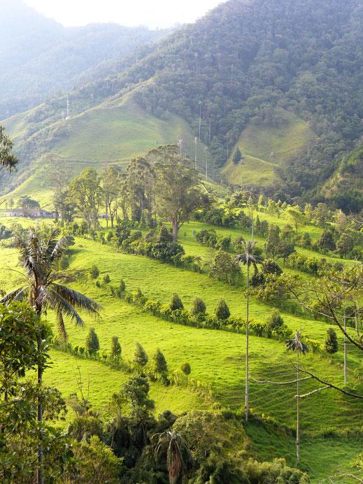 Für Aktive ein ideales Terrain für Trekking und Wandern... Valle de Cocora, Kolumbien (Foto Jörg Schwarz)