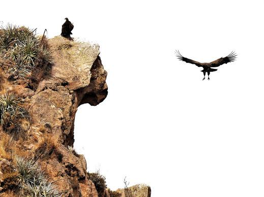 Im Landeanflug, Cruz del Condor, Peru (Foto Jörg Schwarz)