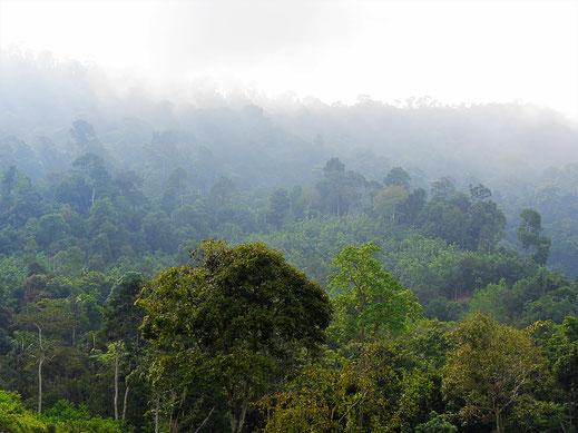 Blick auf das Dach des Taman Negara Nationalparks, Malaysia (Foto Jörg Schwarz)