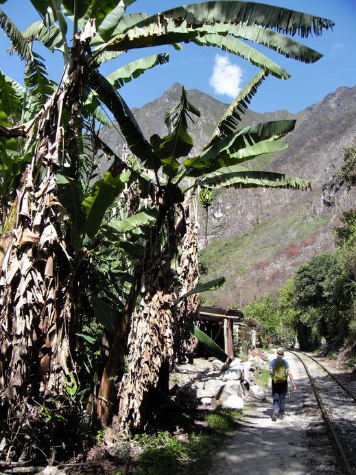 Oben angekommen geht es moderat, fast ebenerdig weiter entlang der Gleise, Hidroelectrica, Peru (Foto Jörg Schwarz)