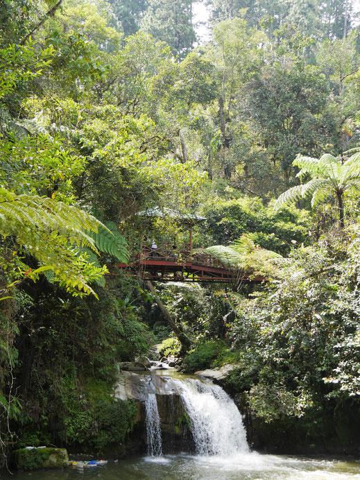 Natürlich gibt es auch schöne Wasserfälle... Cameron Highlands, Malaysia (Foto Jörg Schwarz)