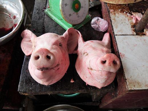 ... und mit Sicherheit nichts für Vegetarier und Tierfreunde... Battambang, Kambodscha (Foto Jörg Schwarz)