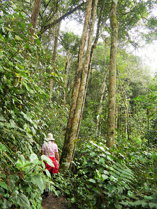 Noch vor dem Regen... Cameron Highlands, Malaysia (Foto Jörg Schwarz)