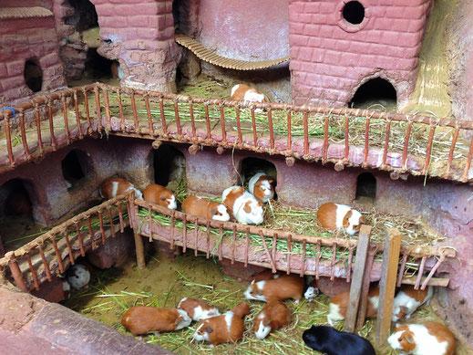 So schön das Häuschen, so klar das Ziel: 'Cuy al horno', Pisac, Peru (Foto Jörg Schwarz)