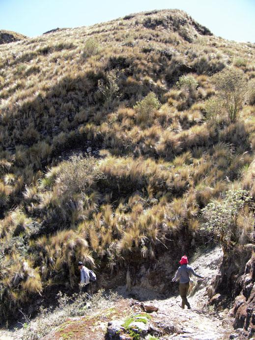 Es geht abwärts - das Profil dieses Treks ist eine krumme Nase... Sorata, Bolivien (Foto Jörg Schwarz)
