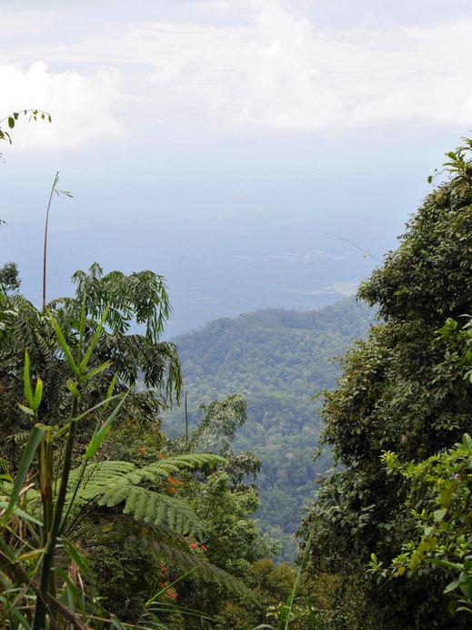 Selten, dass der Wald einen Weitblick freigibt, Taiping, Malaysia (Foto Jörg Schwarz)