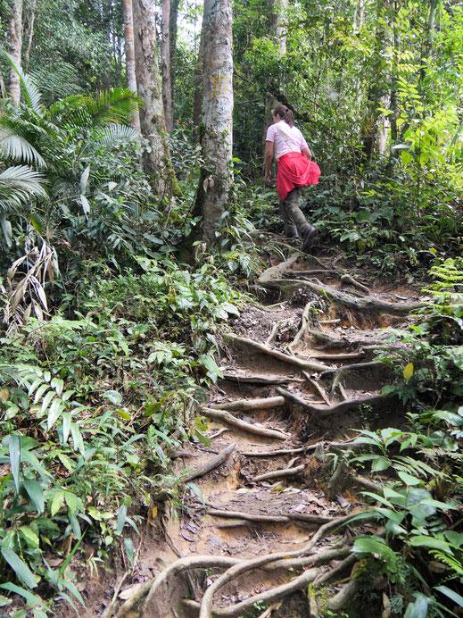 Es ist bergig... Und es geht auch aufwärts... Cameron Highlands, Malaysia (Foto Jörg Schwarz)