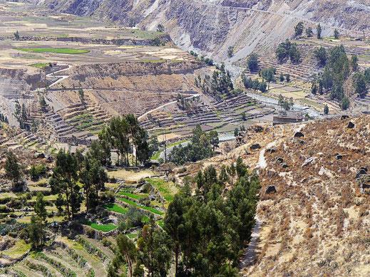 Die Region ist eine der terassenreichsten Gegenden der Welt, Chivay, Peru (Foto Jörg Schwarz)