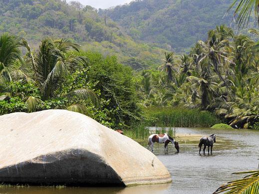 Es geht u.a. immer wieder an einmündenden Flüssen vorbei, Tayrona Park,  Kolumbien (Foto Jörg Schwarz)