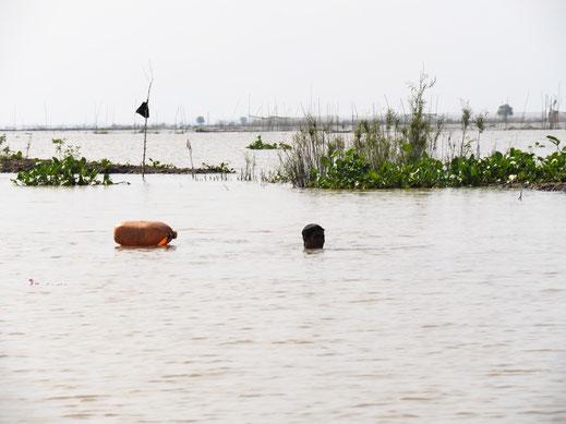 Buchstäblich bis zum Hals im Wasser - Reusentauchen... Angkor Borei, Kambodscha (Foto Jörg Schwarz)