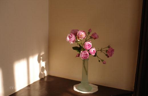 横浜 写真教室 お花