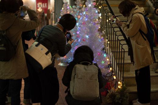 クリスマスツリーを撮影される皆様