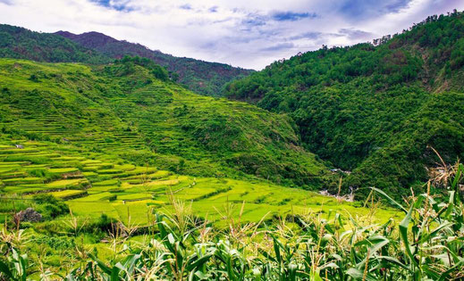 Mountain rice terraces of Luzon, Philippines • Picture by Aldrino via Unsplash
