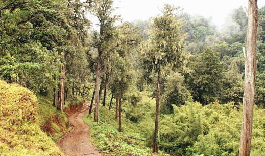 Forests of Mount Kenya, Kenya • Picture by Martin Mergili
