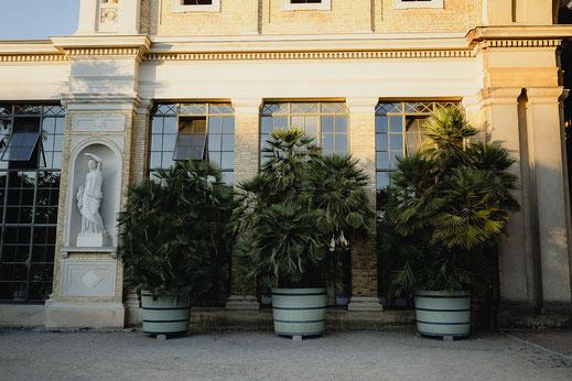 Palmen im Orangerie Schloss Potsdam