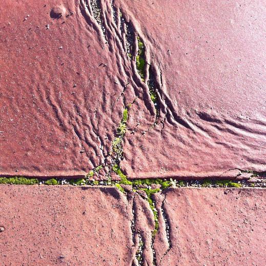 Légende : « Sur les trottoirs V » photo sur toile 60 X 40 cm. Alain Mila