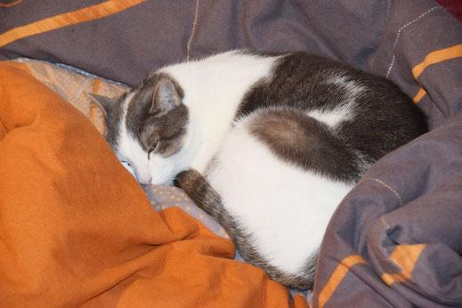 Sandras Katzenpension - Foto Voraussetzungen Futter