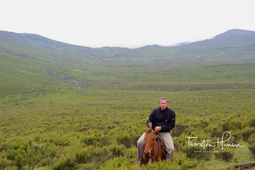 Pferde Trekking in den Bale Mountains in  Äthiopien DODOLA - ADABA TREKKING AND HORSE RIDING - National Park Head quarter Dinsho. The trekking and house riding between this community base trekking trail there is the camps situated on the attitude of 3080