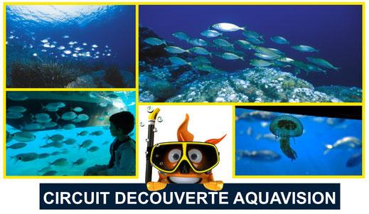 vision sous-marine poissons vus de l'aquavision six fours