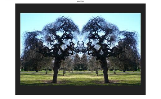 Bäume im Park, Perpektiven, Baumbild