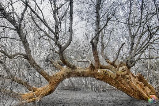 Bogenbrücke - geschaffen von Mutter Natur am Darßer Ort