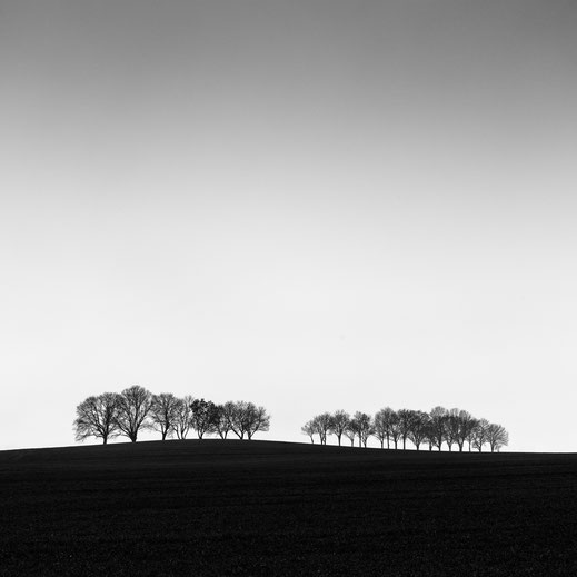 Minimalismus, Fotografie, trees, photography, black and white, Fotokunst, minimalism, minimalist, minimalistisch, Holger Nimtz, Wandbild, Kunst, fine art,