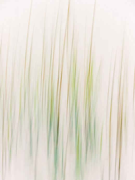 Minimalismus, Fotografie, abstrakt, Botanik, Uckermark, photography, moderne, Fotokunst, minimalism, minimalist, minimalistisch, Holger Nimtz, Kunst, abstraction, fine art,