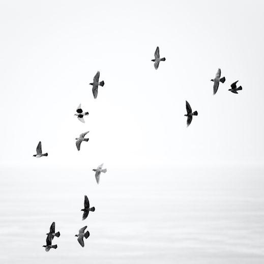 Flug, Freedom, El Mocanal, Tauben, Freiheit, peace, Frieden, El Hierro, Canary Islands, Kanarische Inseln, Kanaren, Holger Nimtz,  fine art, monochrom, schwarz-weiß,  minimalismus, minimalist, minimalism, Fotokunst,