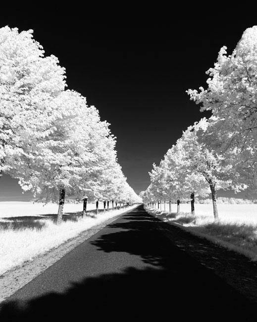 Infrarotfotografie, Uckermark, Infrarot, Holger Nimtz, Infrared, Fotografie, Photography, Infrarotaufnahme, Fotokunst, Bäume, trees, Wood-Effekt,