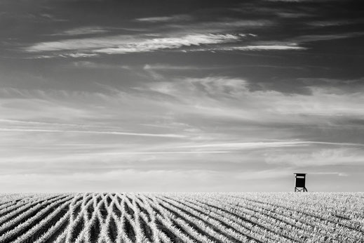 Feld, Maisfeld, landscape, Landschaft, Hochsitz, hunting stand, Infrarot, Holger Nimtz, Infrared, Fotografie, Photography, Infrarotaufnahme, IR,