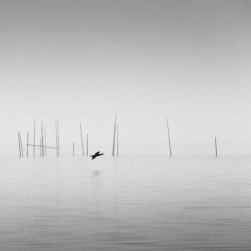 Müggelsee, Nebel, misty, photography, Minimalismus, Fotografie, minimalism, minimalist, minimalistisch, Holger Nimtz, Wandbild, Kormoran, silence, Ruhe, Stille,  Kunst, fine art, Fotokunst,
