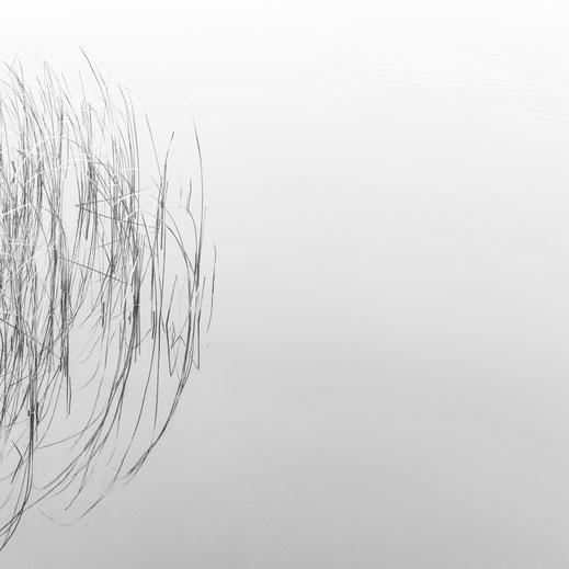Minimalismus, Fotografie, Schilf, Ruppiner See, photography, black and white, Fotokunst, minimalism, minimalist, minimalistisch, Holger Nimtz, Wandbild, Kunst, fine art,